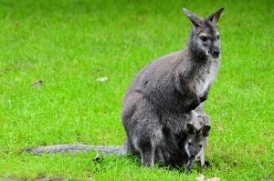 Australien ist ein beliebtes Ziel für Work and Traveller