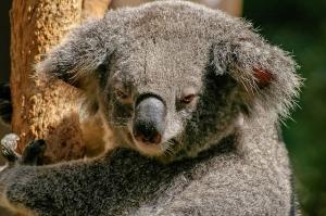 Bei der Au-pair-Agentur häufig nachgefragt: Au-pair Australien