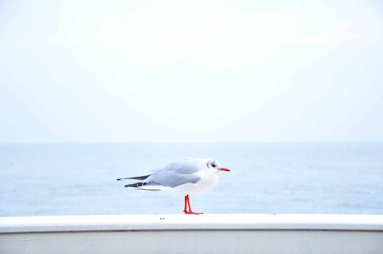 Seekrankheit - Urlaub retten