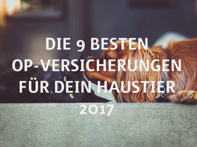 Die 9 besten OP-Versicherungen für Dein Haustier 2017