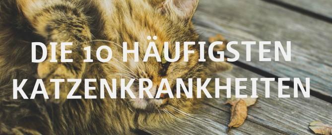 Das sind die 10 häufigsten Katzenkrankheiten