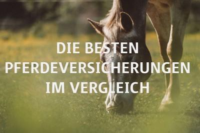 Pferdeversicherungen im Vergleich Titelbild