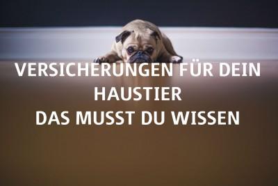 Versicherungen für Dein Haustier - das musst Du wissen_Titelbild