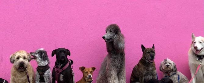 Die 7 besten Hundeversicherungen 2019: Zehn Hunde sitzen vor einer pinken Wand