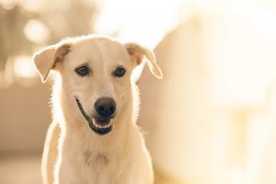 Tipps für die richtige Zahnpflege beim Hund
