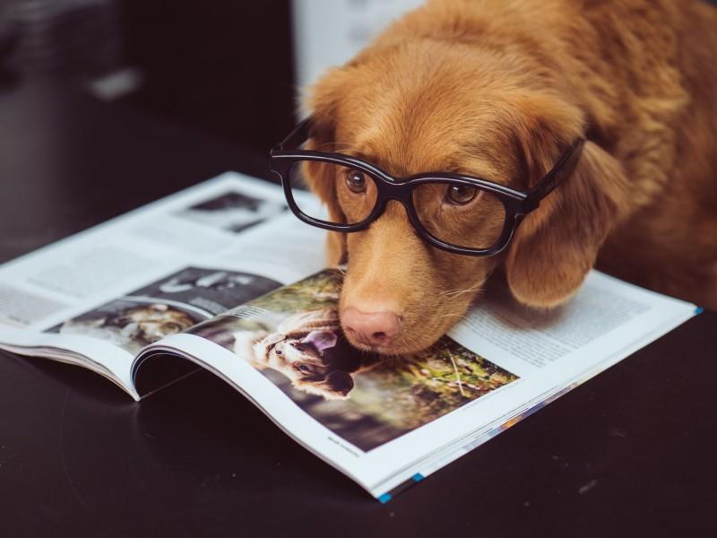 Die häufigsten Hunde-Haftpflichtschäden: Hund liegt mit der Schnauze auf einer Zeitschrift und hat eine Brille auf