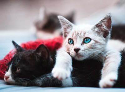 Schwarze und weiße Katze im Körbchen.