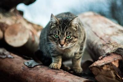 Katze sitzt auf Baum und schaut in die Kamera.