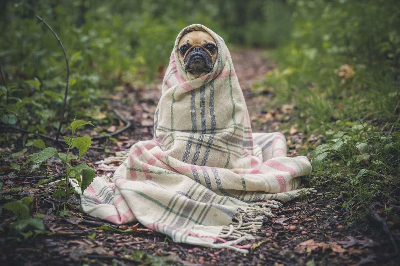 Was eine gute Hundeerziehung ausmacht: Hund sitzt mit einer Decke umgewickelt im Wald.