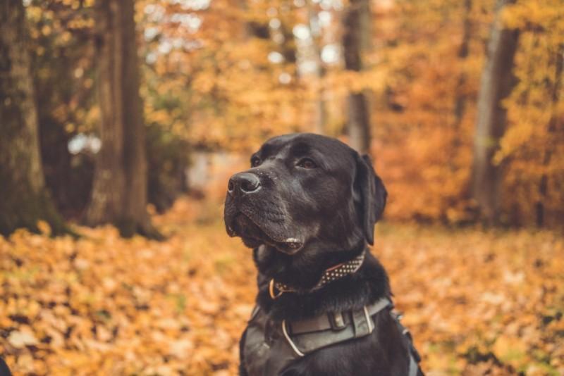 Was eine gute Hundeerziehung ausmacht: Schwarzer Hund sitzt im Wald.