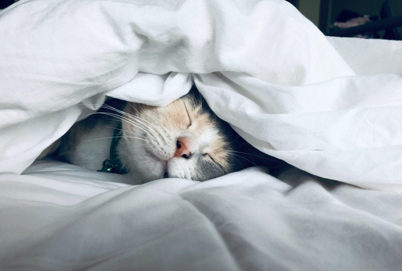 Wie übersteht Dein Vierbeiner die kalte Jahreszeit am besten: Katze unter der Bettdecke am schlafen.