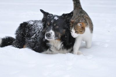 Wie übersteht Dein Vierbeiner die kalte Jahreszeit am besten: Hund und Katze zusammen im Schnee.