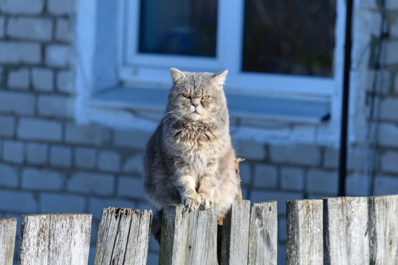 Katze sitzt auf dem Gartenzaun.