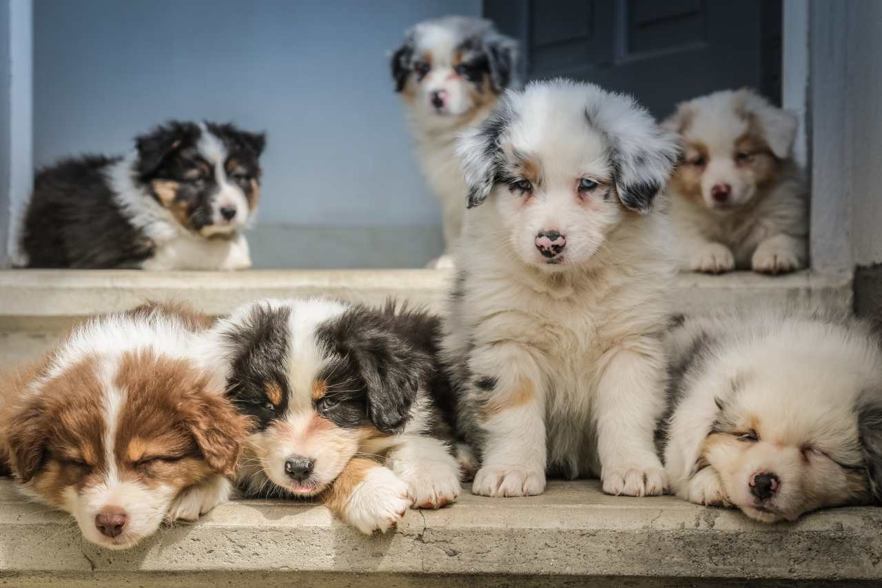 Hundewelpen sitzen auf der Treppe.