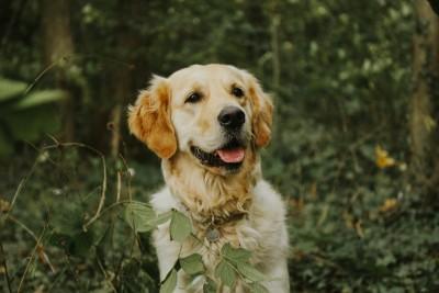Hund sitzt im Wald.