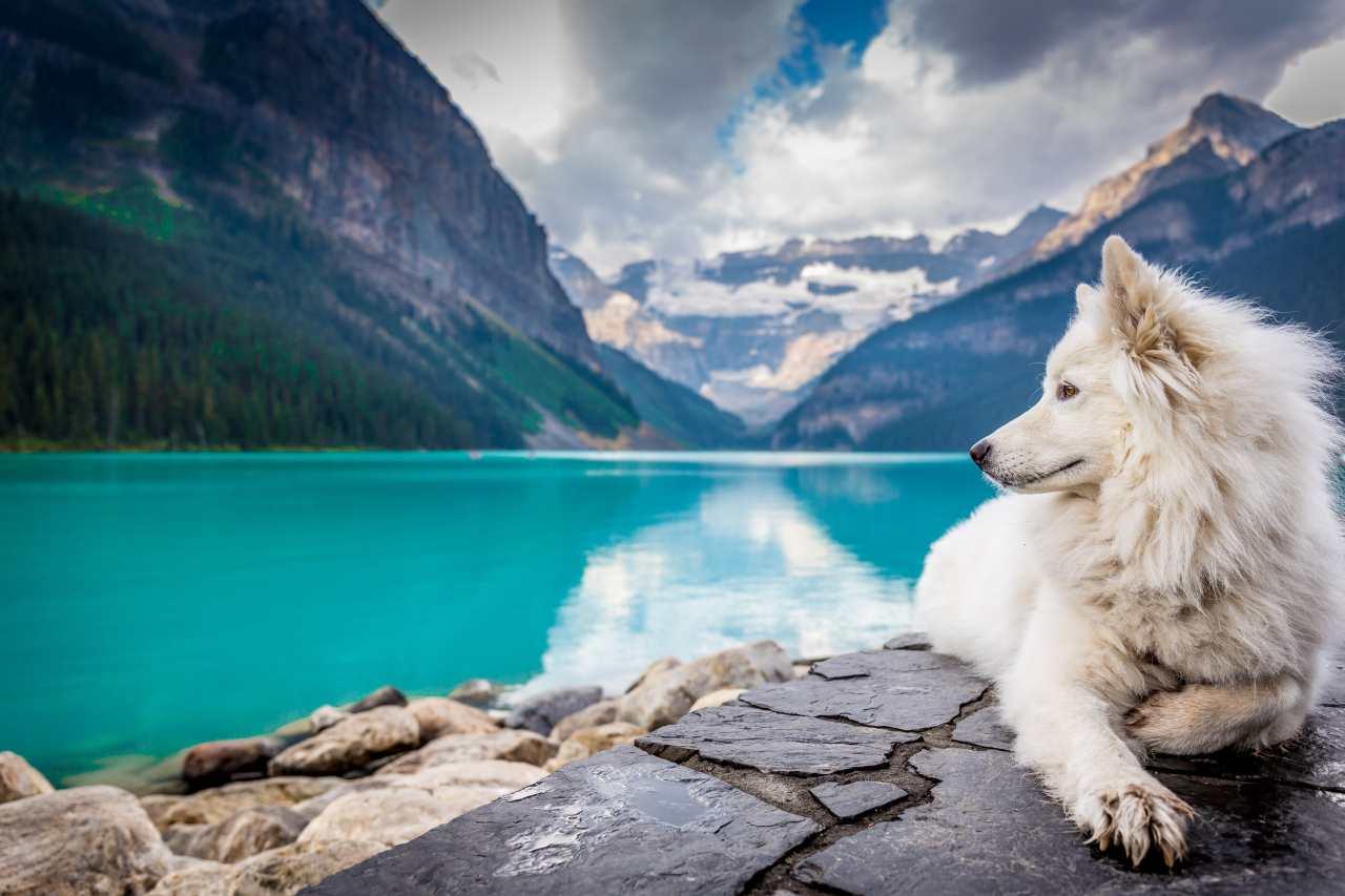 Weißer Hund liegt vor einem See und Bergen