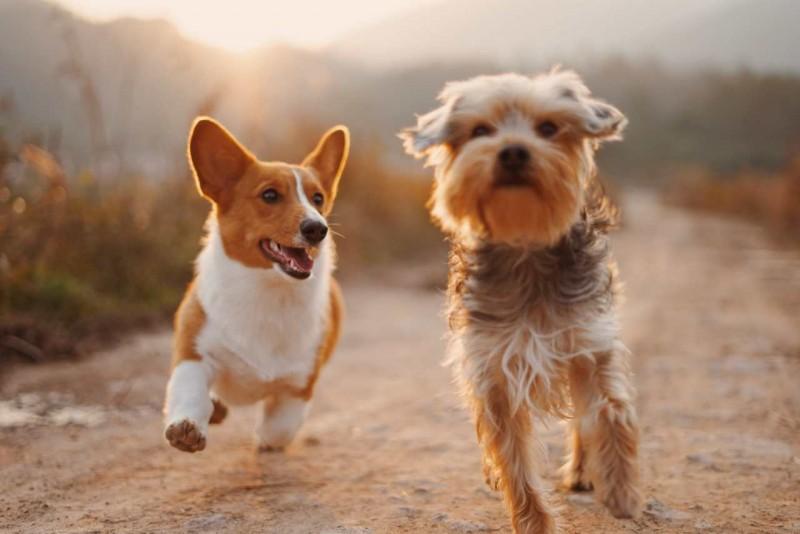 Zwei Hund spielen in der Natur miteinander.